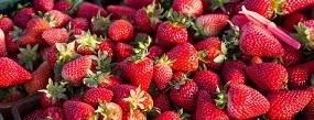 Fresh Aussie Strawberries